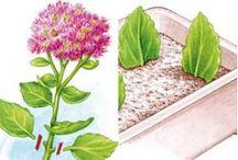 bouturage, entretien plantes etc...