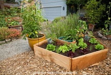 Gardening in the 'Burbs / Ideas for landscaping and food growing in urban, suburban and other small outdoor spaces. Some information is specific to Zone 3.