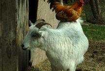 Farm & Barn