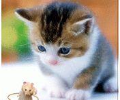 可愛い 動物