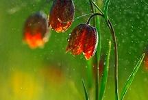 natura-kwiaty