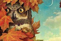 Corujas / #owl#avesderapina#paixão