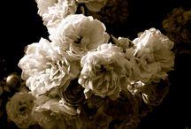 White flowers / White flowers