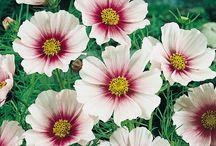 ny blomst