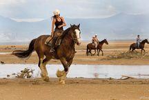Cavalli d'estate