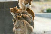 Koty ,kici,kici