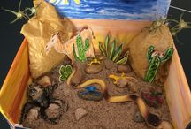 Endangered Animal Habitat Dioramas