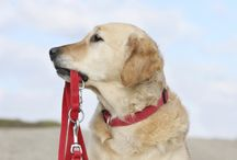 Safety & Health Tips for Pets / Tips to Keep our Pets Safe & Healthy