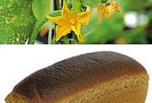 Сад Удобрения и рецепты для сада и огорода