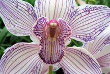 Beautiful Botany / by Sarah Hagar