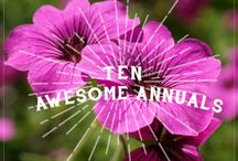 Garden Annuals of Fame / Repeat yearly, by seed if possible.  / by Garden Expressionist