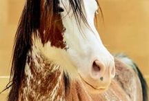 HORSES / Beautiful Horses