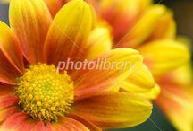 花 グラデーション