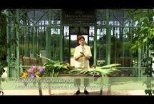 Conseils de plantation / Comment planter mes iris et lys-hémérocalles et comment en prendre soin ?  Tout les conseils sont là !
