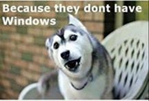 Vicces kutyák