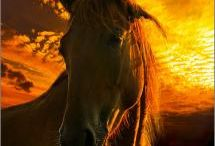 Gorges horses / Outstanding beautiful horses