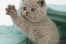 Animals: Kitty Cat