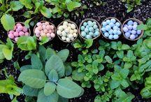 Seeds bombs