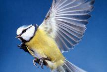 Birds - Vtáky...