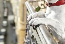 Petcations / Pets on Vacation, Vacation Tips for Pet and Pet Friendly Vacations