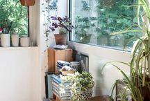Interiors - Plant life