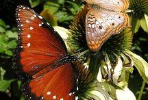 ༺♥༻Butterflys༺♥༻