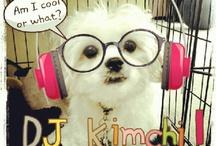 Fluffy Kimchi / Fluffy kimchi / by Wowie Mutya-Esteban