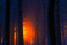 trees / by Anne-Marie Lussier