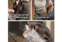 Funny Animald
