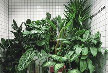 ~greenhouse