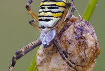 Bogarak, hüllők, rovarok