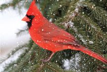 "Holiday Cards -- ""Doves / Birds"" / Gliding on air streams, soaring above the clouds.  Peace and beauty will resonate when receiving a card from Greeting Card Collection - See more at: http://greetingcardcollection.com/holiday-cards-doves-birds"