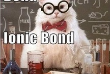 Fav Chemistry Cat Jokes