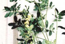 Flowers+Plants