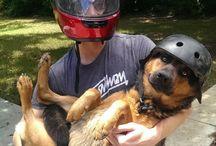 puppy bicker