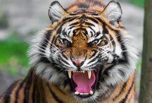 Animals Attack / Animals Attack Videos