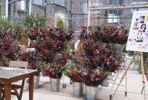 bloomon X Flower Workshops / Du willst lernen, wie man das perfekte bloomon Bouquet kreiert? Komm zu unserem Flowerworkshop und wir zeigen Dir, wie aus unseren Blumen mit viel Fantasie, Kreativität & Liebe ein Strauß voller Glück gebunden wird. Alle Termine und weitere Infos findest Du auf unserem Blog: https://bloomon.de/blog/header/workshops/