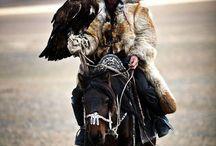 Eagle handler hunting