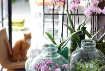Orchids terrarium
