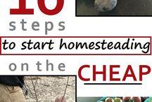 house - homestead