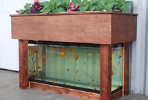 Aquarium:- Aquaponics