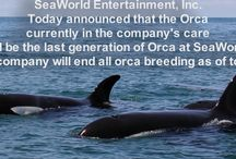 Orca Rescues Foundation / My charity work