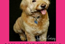 Quotes  / Quotes about our furry friends