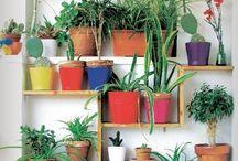 Plantas y macetas