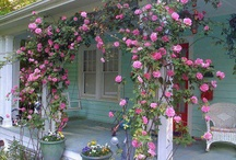 Front porch Roses