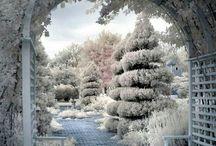 Garden.Winter.