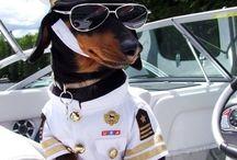 dashounds