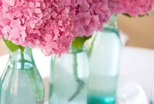Colour Crush - Pink and Blue