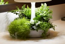 Decorate with plants / Use greenery to brighten up your life, and you air!