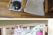 Mobília Para Gatos